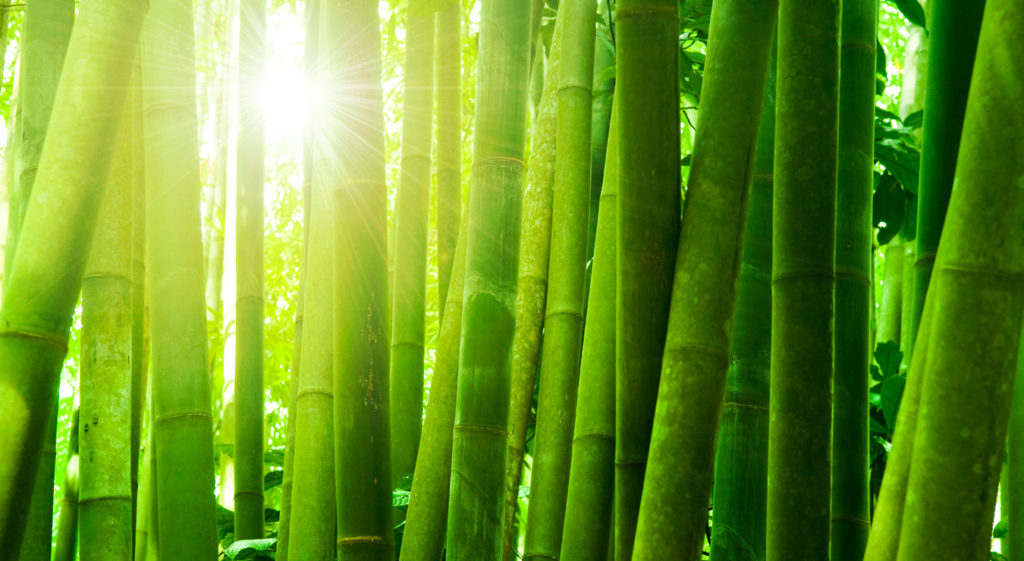 Antibacterial Properties of Bamboo